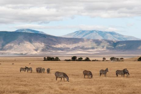 Tanzania Northern Parks – 5 Day Budget Safari tour