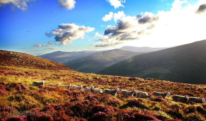 Ireland Walking Tour