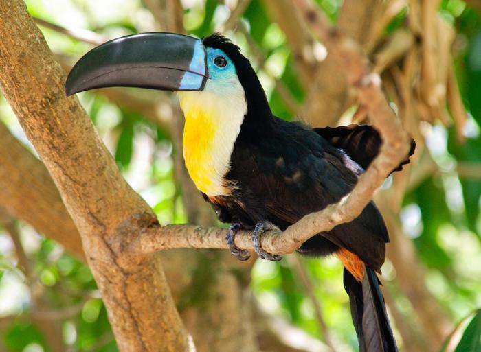 Antigua Caribbean Central America Encompassed Trip