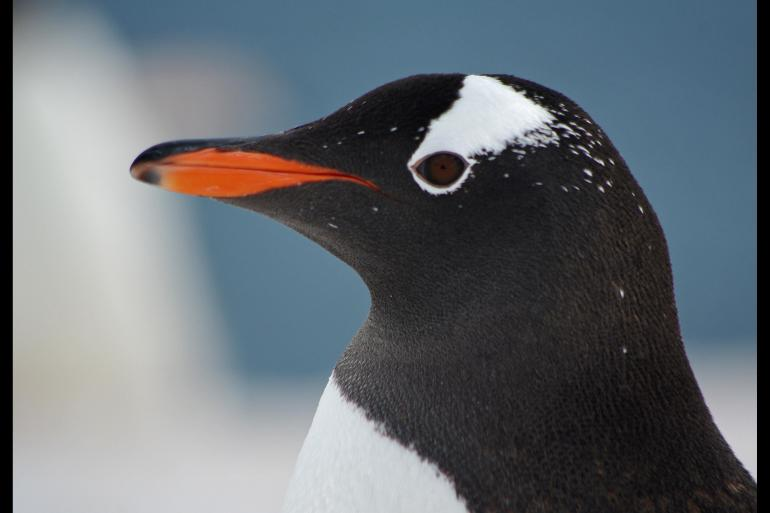Nature & Wildlife Nature Fly & Cruise – Epic Antarctica package