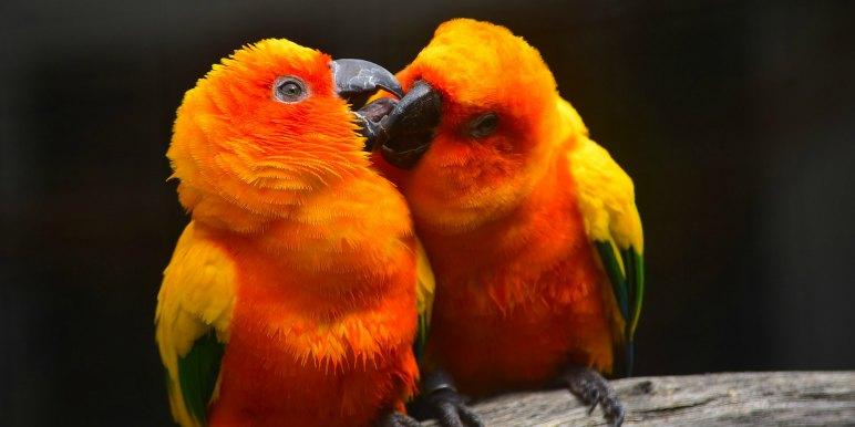 Parrots in the tropics