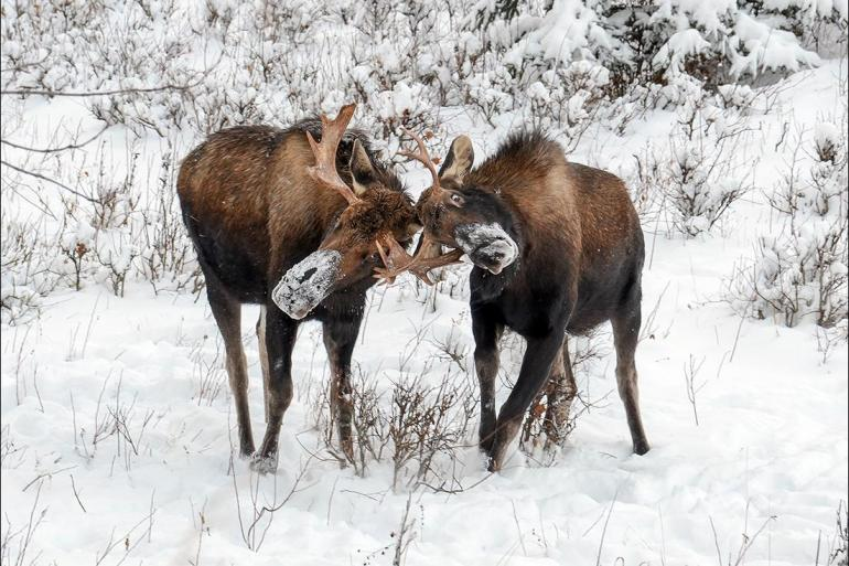 Denali Denali National Park Explore Alaska Trip