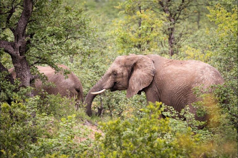 Hwange National Park Johannesburg Vic Falls to Kruger Trip