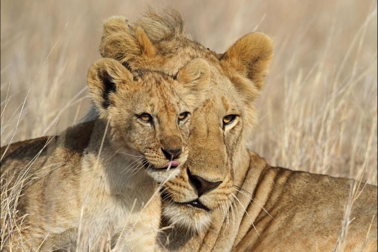 Ngorongoro Crater Serengeti National Park Tanzania Family Safari Trip