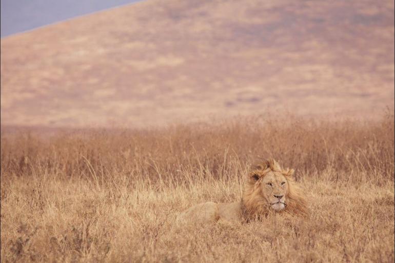 Nairobi Rift Valley The Masai Heartlands Trip