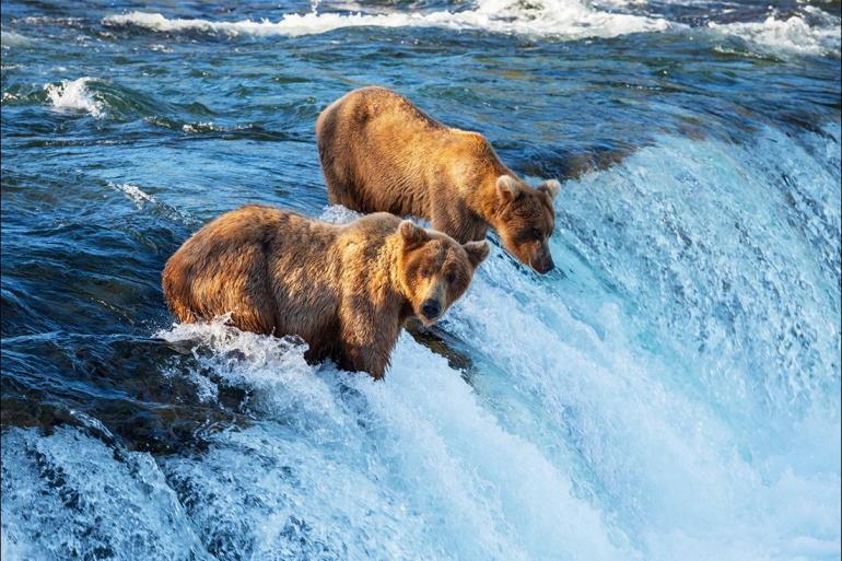 Alaska Anchorage Explore Alaska Trip