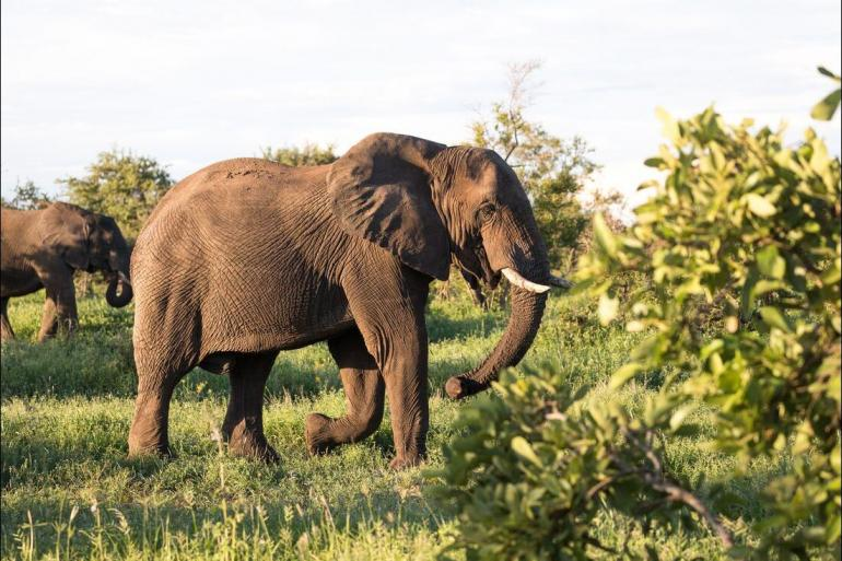 Durban Johannesburg Kruger & Coast Trip