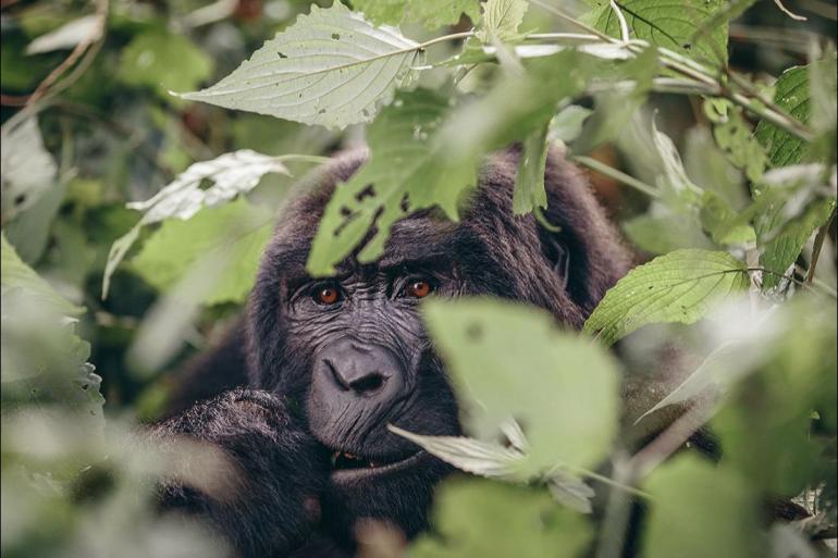 Nairobi Queen Elizabeth National Park Gorillas & Game Parks Trip