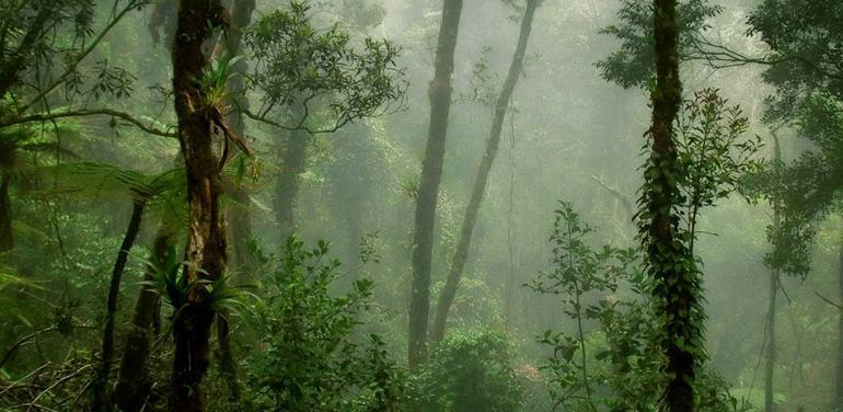 Wild Sarawak tour