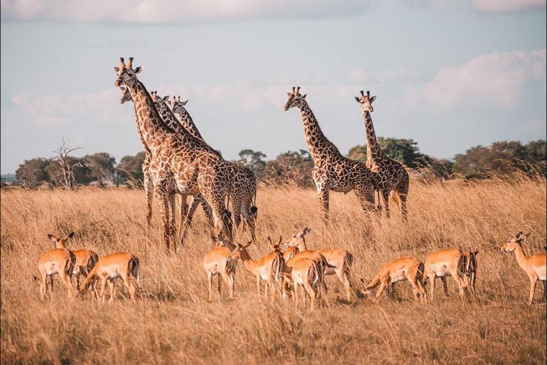 Safari Wildlife viewing Vic Falls to Stone Town package