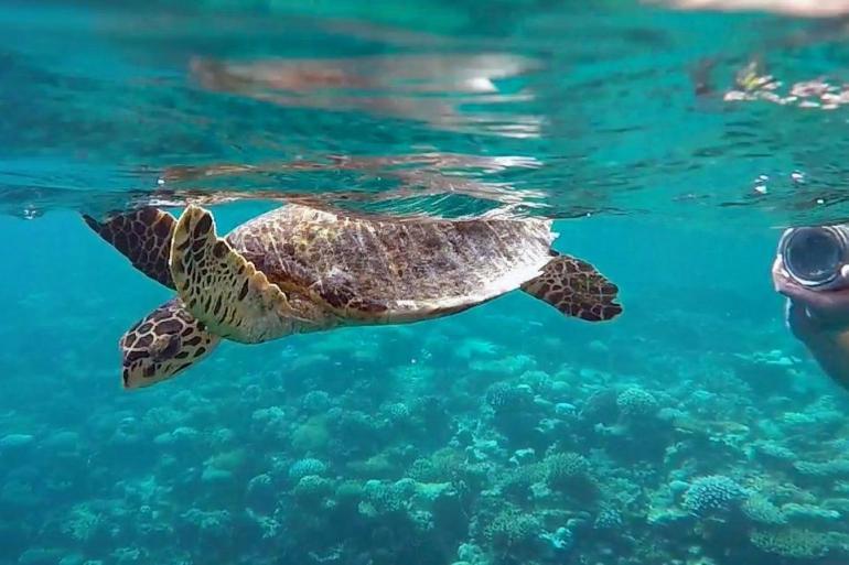 Nature & Wildlife Wildlife viewing Marine Wildlife of the Maldives package