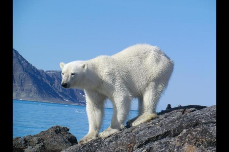 Nature & Wildlife Wildlife viewing Realm of the Polar Bear - M/S Spitsbergen package