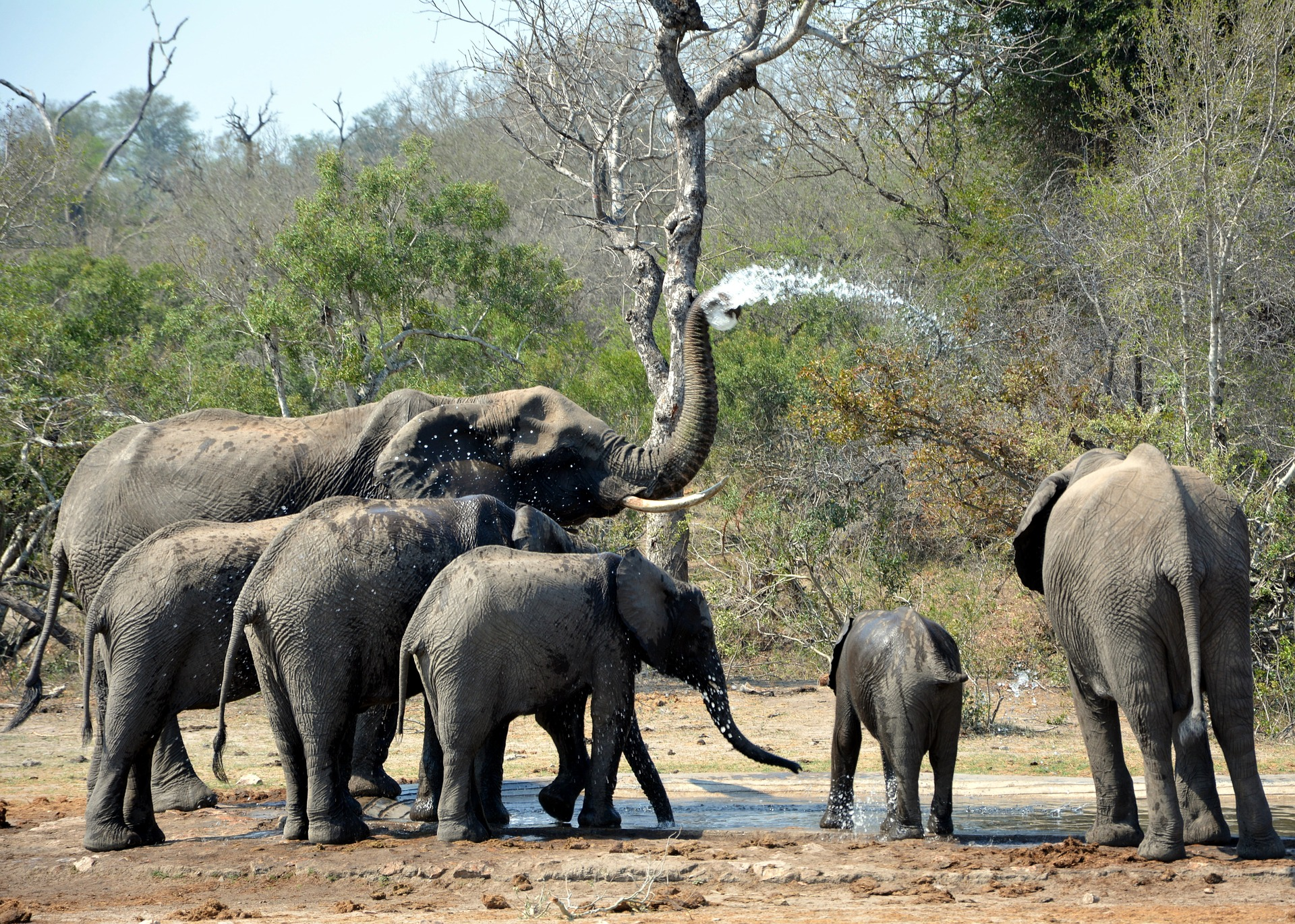 9 Day Luxury Cape Town & Kruger Experience tour