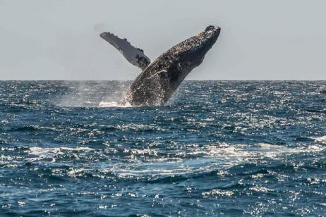 Mexico Sailing & Whale Watching Expedition tour