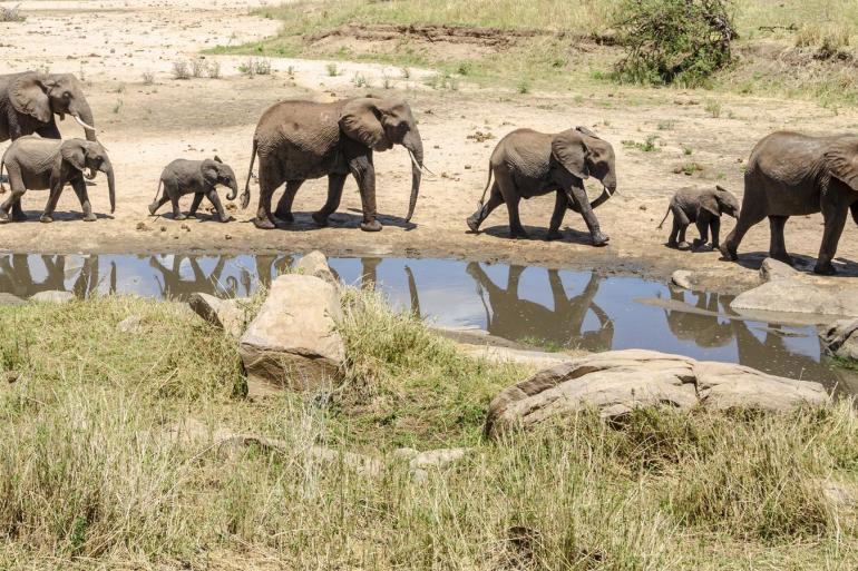Classic Southern Tanzania Safari Expedition tour