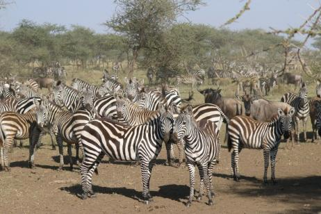 Kenya Adventure Safari – Samburu, Lake Nakuru & Masai Mara tour