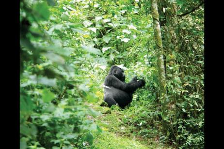 Game Parks & Gorillas tour