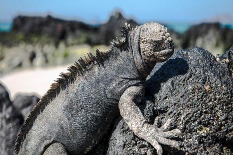 Galápagos — North & Central Islands aboard the Eden tour
