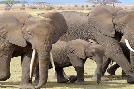 Kenya: A Classic Safari with Nairobi & Maasai Mara Extended Stay tour