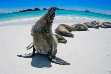 Machu Picchu & Galapagos tour