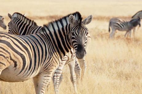 Kenya Classic Safari, Victoria Falls and Cape Town tour
