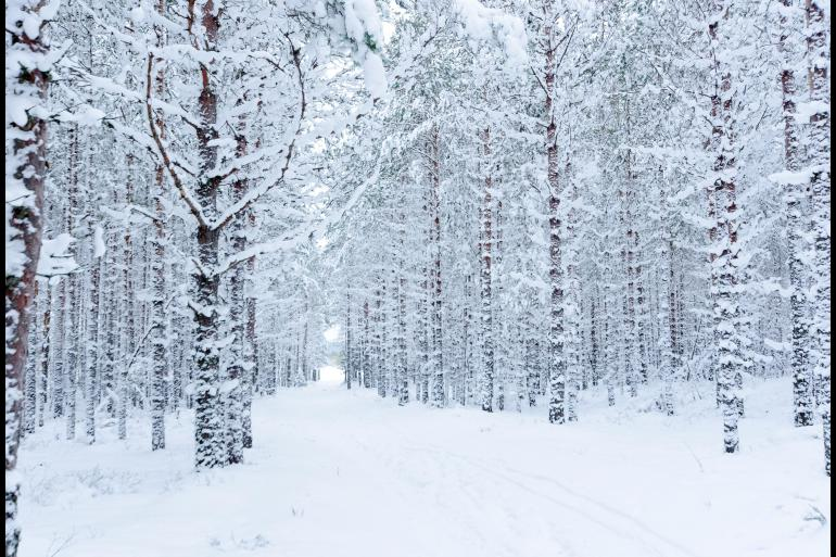 Cultural Culture Cross-country Skiing: Estonia package