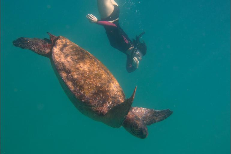 Darwin Galapagos Galapagos Encounter: Central Islands (Grand Queen Beatriz) Trip
