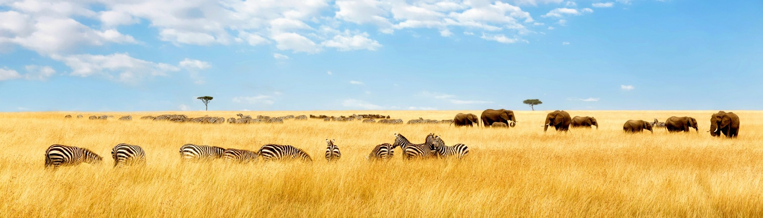 Travel & Leisure World's Best - Top Safari Outfitters of 2018