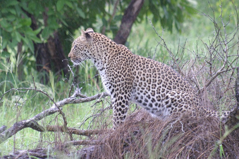 Discovery Tours – South African Safari