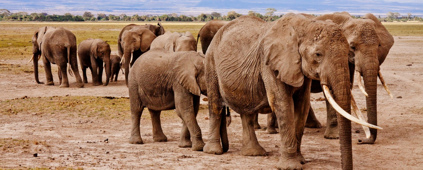 Alluring Africa Profile - 8 reviews, 2019 trips
