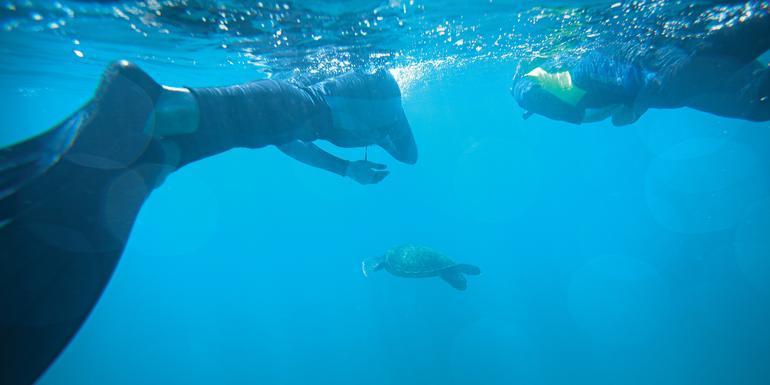 Galápagos Central Islands & Inca Discovery tour