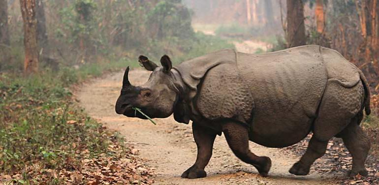 Chitwan Extension tour