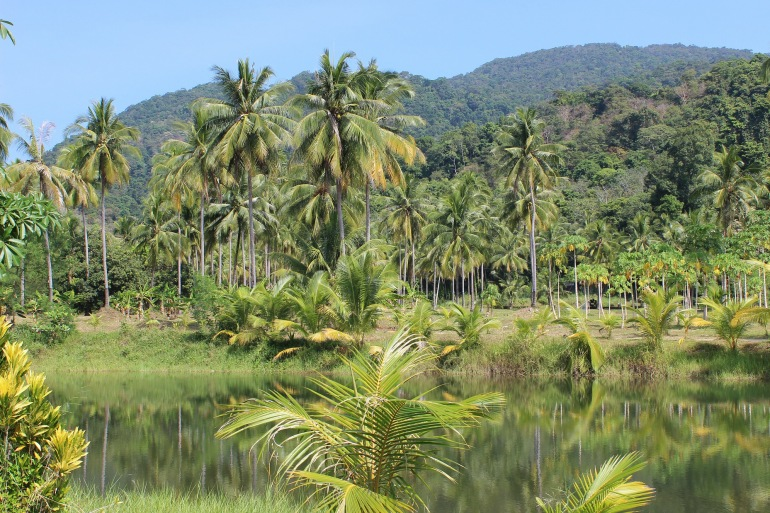 Rain Forest in Brazil, South America_P