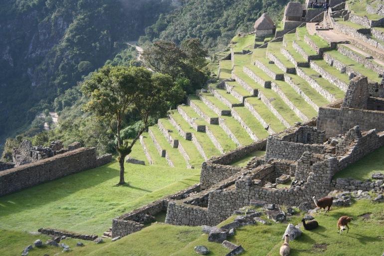 Steps in Inca Trial_Machi Picchu_1880912_P