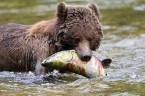 Grizzly Bear Nature Adventure tour