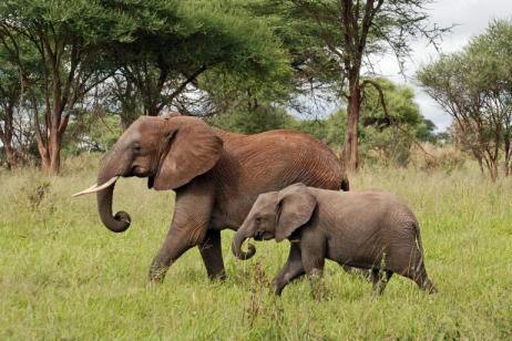 Backpackers Tanzania Safaris tour