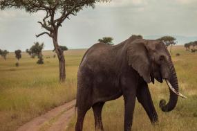 Victoria Falls and Serengeti Adventure tour