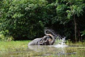 Thailand – Elephants & Islands Expedition
