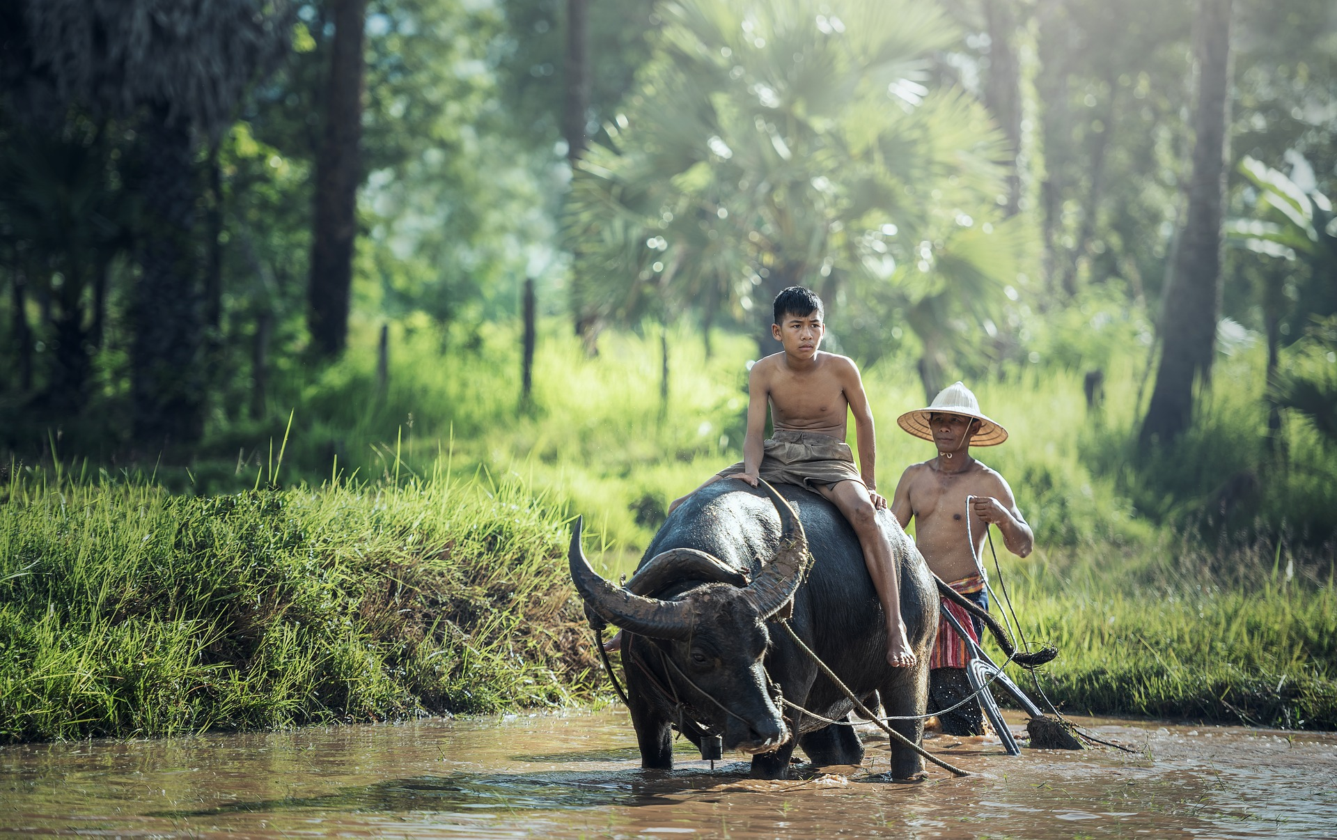 Buffalo Riding Agriculture Asia_ Cambodia_1807517_P