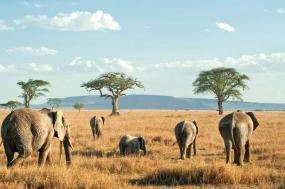 Essential Tanzania tour