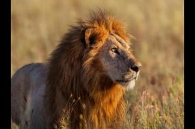Serengeti Lodge Safari + Zanzibar Island