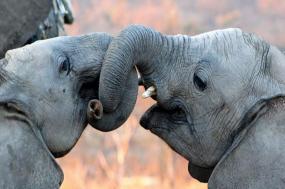 Wild Kruger Camping tour