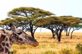 Elewana Sky Safari - Tanzania