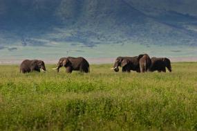 Kilimanjaro Lemosho Route & Safari tour