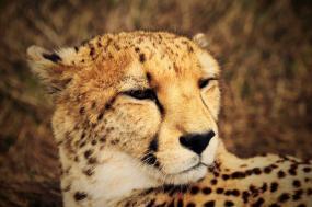 Splendors of South Africa & Victoria Falls tour
