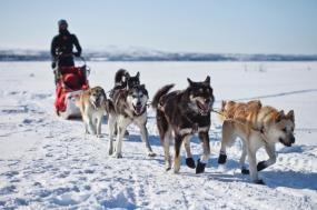 Greenland Traditional Dogsled Expedition