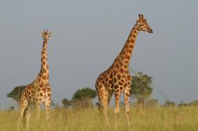 10 Days Wonders of Kenya Safari
