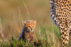 Kenya Adventure Safari tour