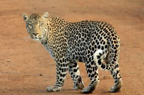 Calving Season Migration Safari