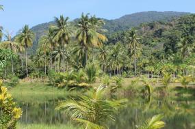 Discover Brazil: Rio de Janeiro to the Amazon Rainforest
